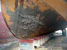 Zebra Mussels (Dreissena Polymorpha)_Infested Ship